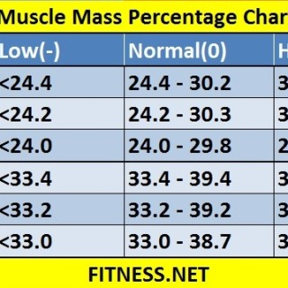 muscle mass percentage chart