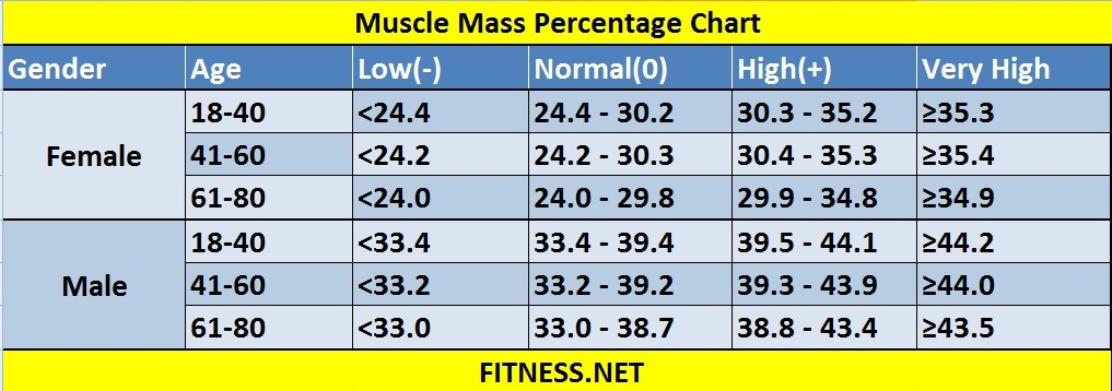 everything about muscle mass percentage with charts - fitness sports, Muscles