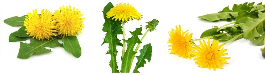 Fruit and Veggie Detox Dandelion-Flower