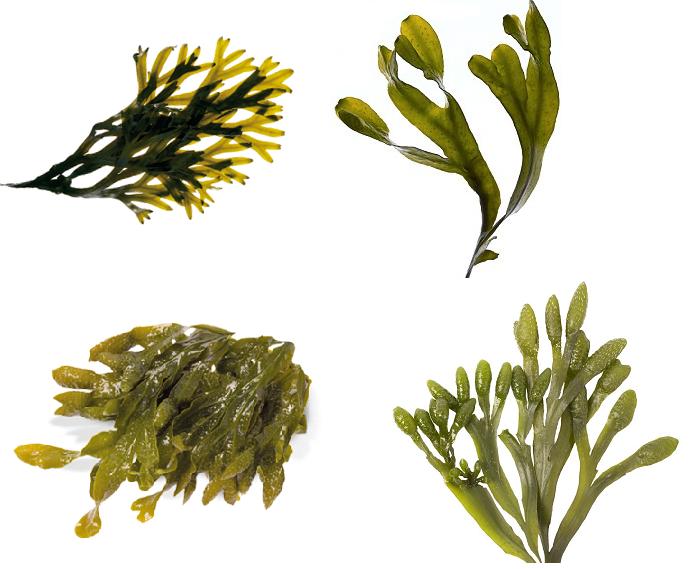 Fruit and Veggie Detox -Seaweed